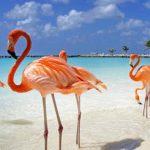 Crazy Days van Corendon nu voor maar 449 Euro naar Aruba of Bonaire 150x150 Crazy Days bij Corendon nu 9 dagen naar Bonaire of Aruba vanaf 499 Euro