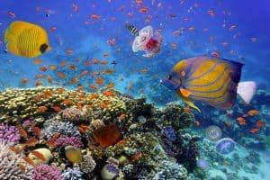 Bewonder de schitterende Rode Zee van Egypte tijdens een duik of snorkeltrip 300x200 8 Dagen all inclusive naar Egypte, 4 **** strandhotel vanaf € 412,