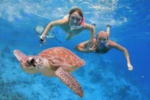 Boek ook een in Alanya wie weet komt u wel een schildpad of dolfijnen tegen 300x200 Nergens goedkoper: 8 daagse vliegvakantie naar Alanya 3 *** Hotel Wien € 411,  vertrek op 21 Augustus